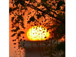 Sunshower.