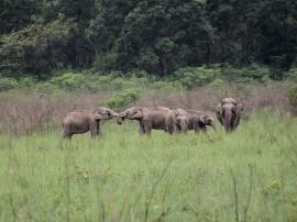 The elephant herd