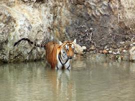 Awakening the Tigress