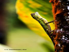 The Amazing Lizard