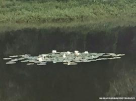 Floating beauties