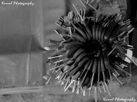 Key Flower