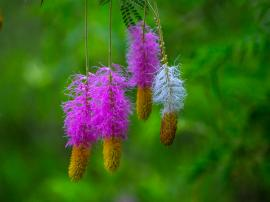 Nature Chime Bells
