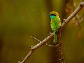 Birds of Bharatpur